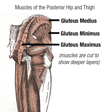 My glutes don t fire quot glute amnesia and corrective exercise